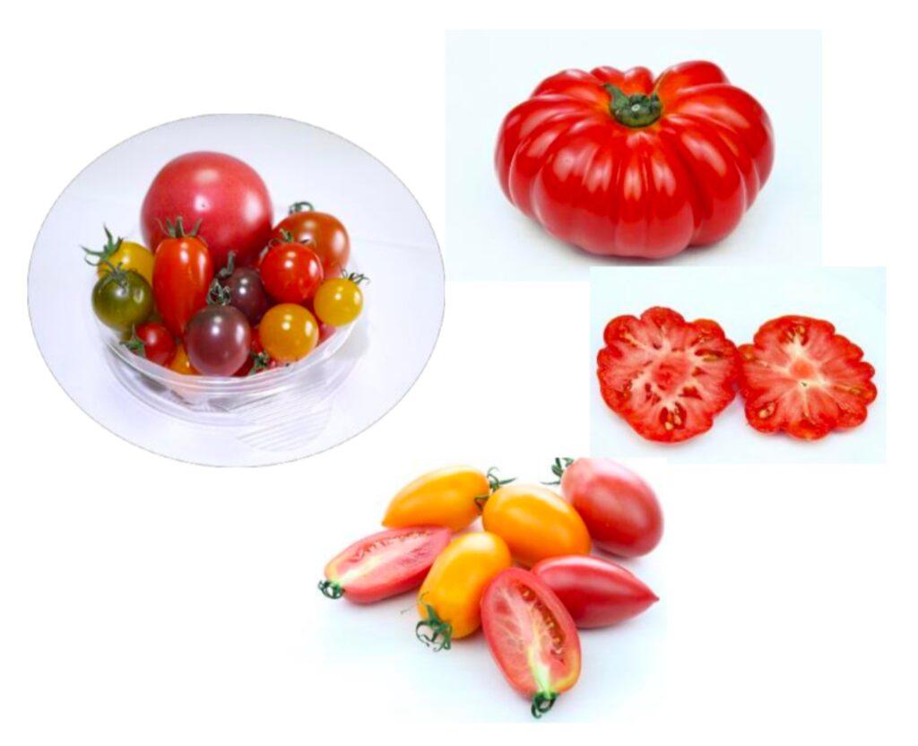 現在のトマト