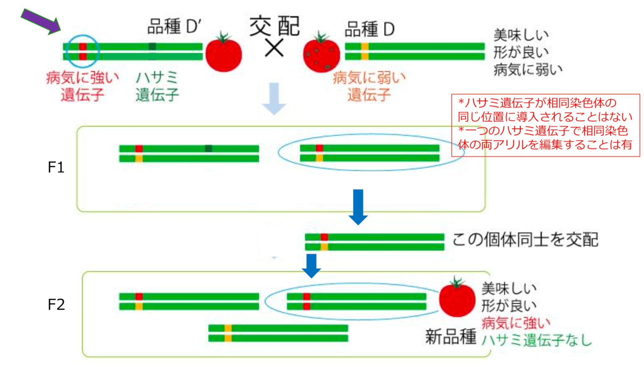 ゲノム編集:ハサミを道具に設計図を書き換える