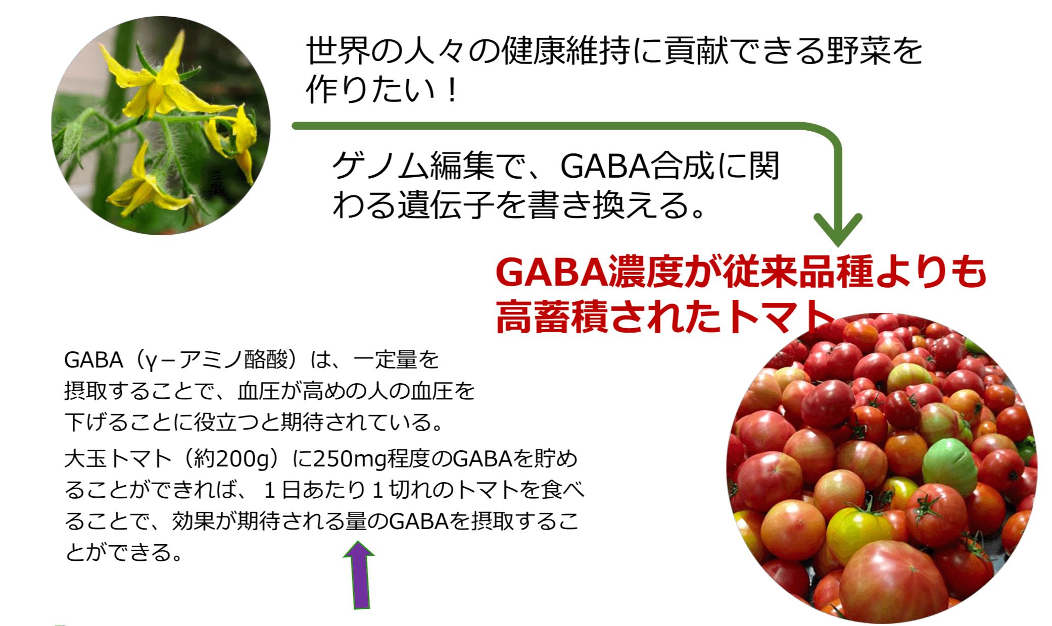 ゲノム編集技術で取り組んでいる事例 GABA高含有トマト(高付加価値)