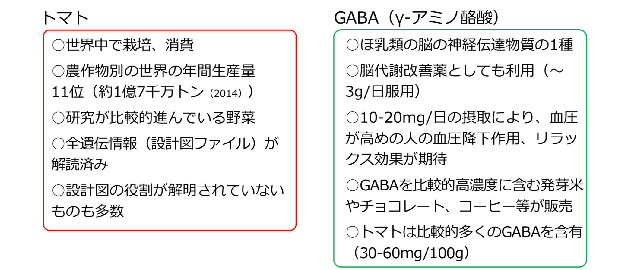 GABA高含有トマトの開発